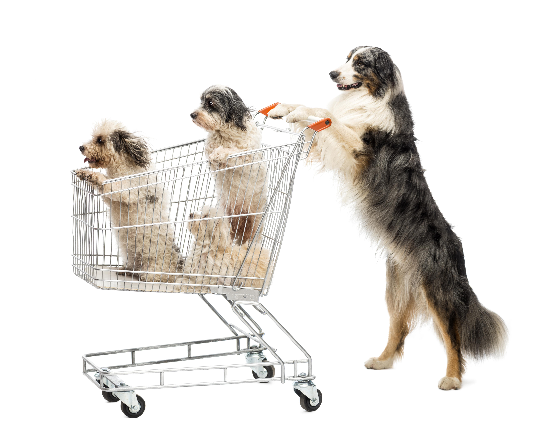 safeway grocery cart