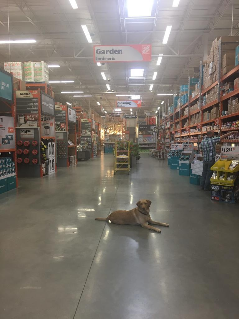 dog friendly home depot