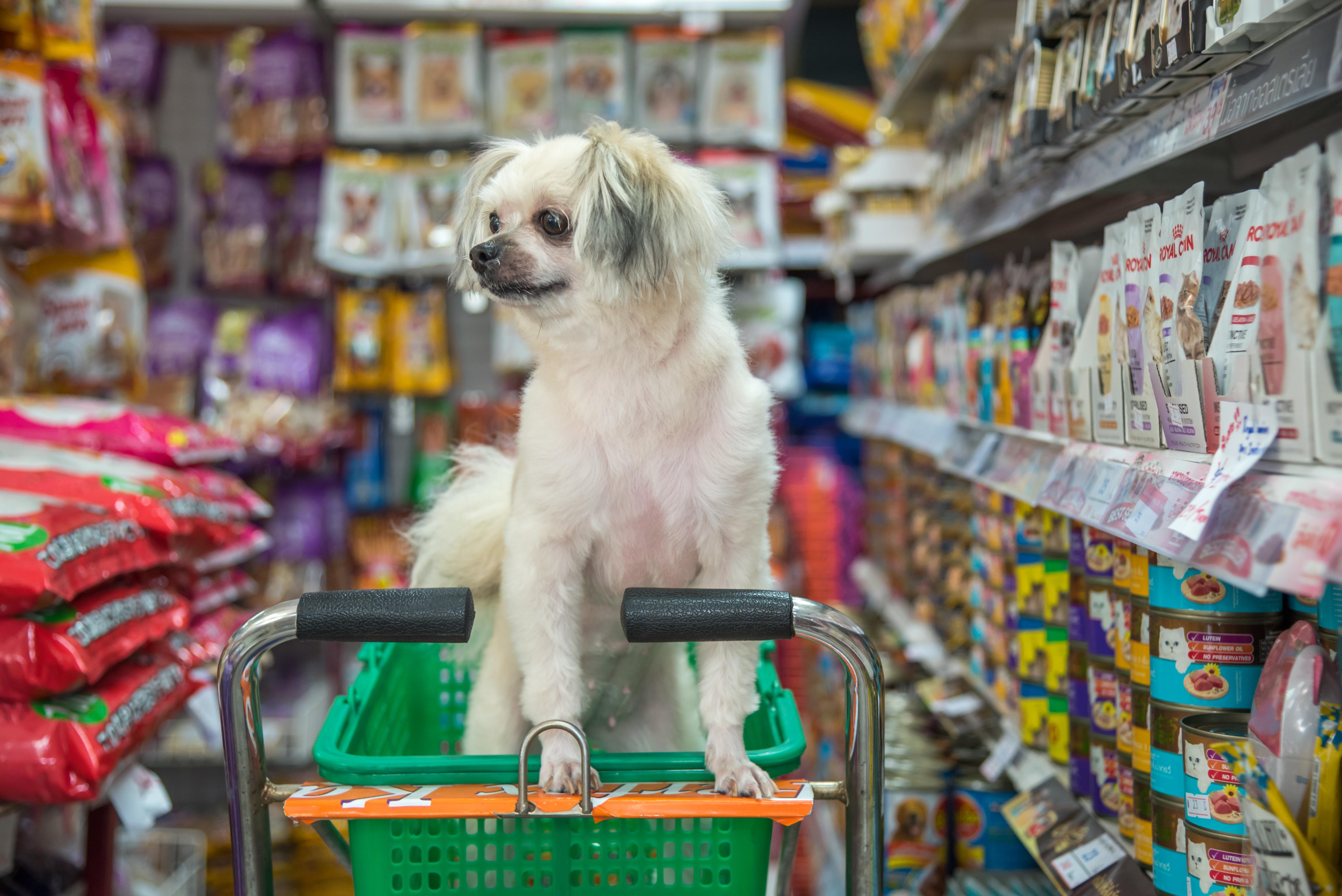 hannaford cart and dog