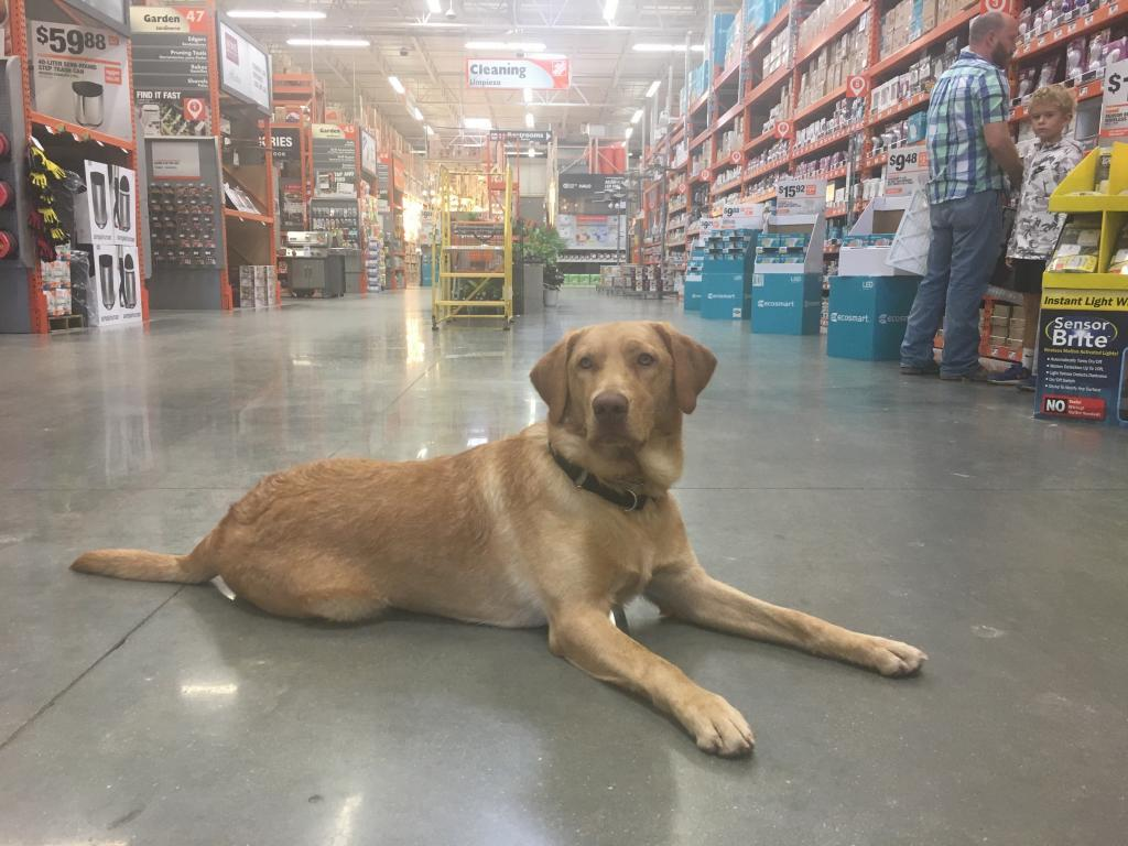 is lowes dog friendly
